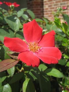 flowerl.JPG